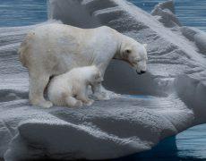 Kreuzfahrt Spezial Lufthansa City Center: Im Land der Eisbären mit MS Fram