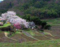 Erleben Sie Japan zur Kirschblütenzeit