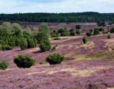Die Lüneburger Heide – Wildromantik pur, vom 15. – 18.09.2018