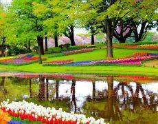 Tulpenblüte im Frühlingsgarten vom 22. – 25.03.2018